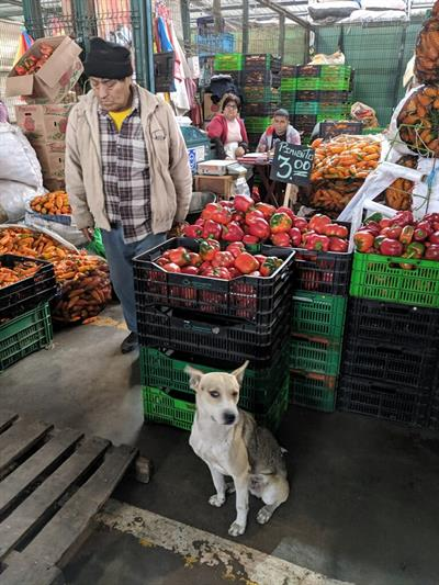 Peru - Wholesale Market Tour 2