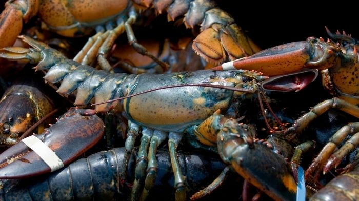 Growing Taste for Processed American Lobster and Jonah Crab in Taiwan