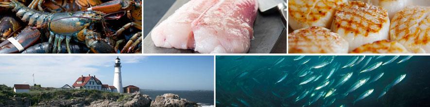 Seafood Program